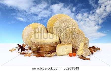 various forms of cheese leaves sky background