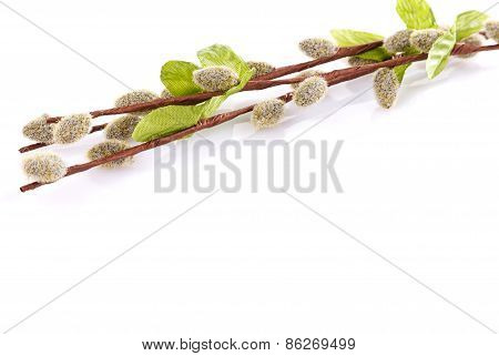 willow branches