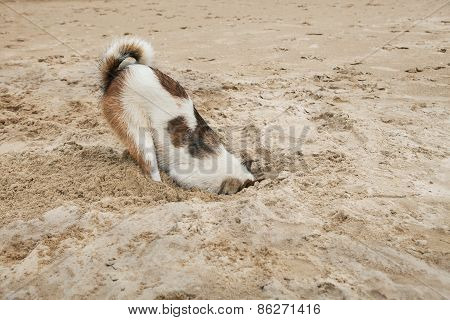 Dog Head In Sand Beach Like Ostrich Shame And Fear