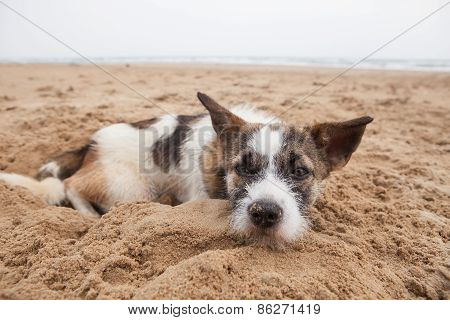 Sorrow Face Of Homeless Dog Lying On Sand Beach With Lonely Feeling