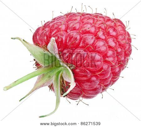 One rich raspberry fruit isolated on a white background.