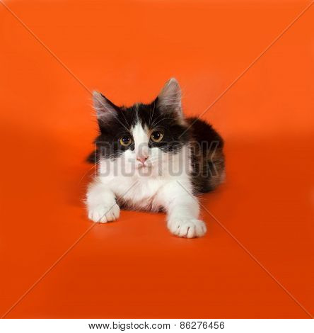 Tricolor Fluffy Kitten Lying On Orange