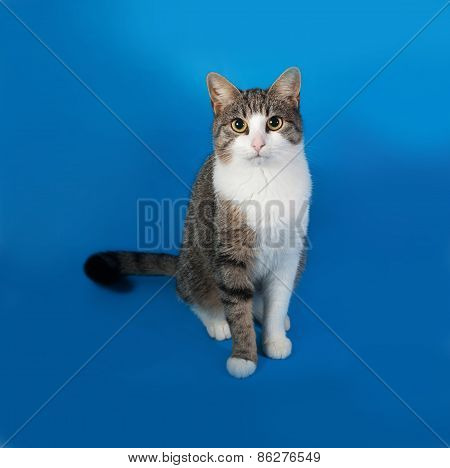 Tabby And White Cat Sitting On Blue