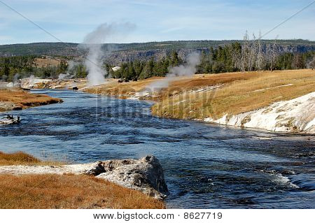 Yellowstone with Bison