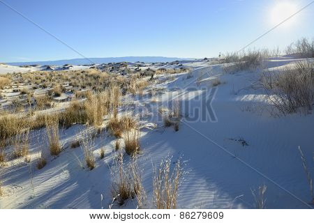 Early Morning View of Desert Plants at White Sands