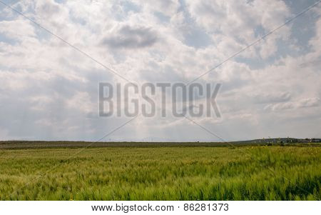 Wheat Field Meadow And Cloudy Overcast Sky