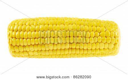 Cornstick corn on the cob isolated