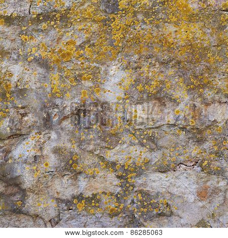 Old wall covered with lichen