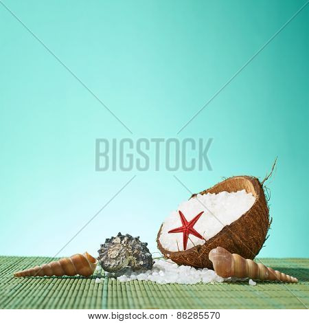 Seashells and coconut shell composition