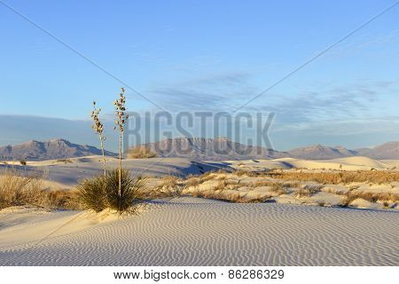 Desert at White Sands and San Andres Mountains