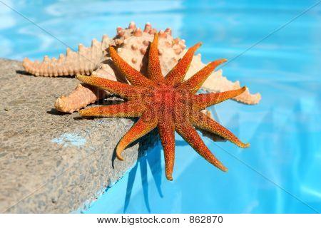 Starfish By Pool