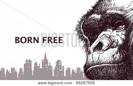 Head gorilla. Hand drawn. Vector illustration eps8