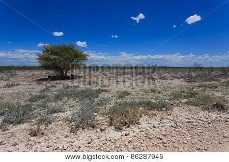 Etosha Panorama