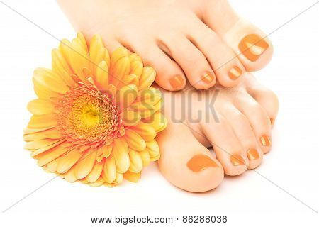 beautiful orange manicured nails with gerbera
