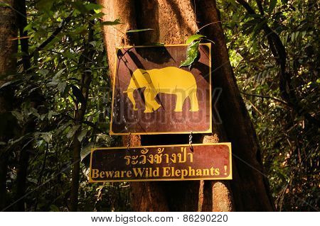 Sign warning of wild elephants, Khao Sok, Thailand