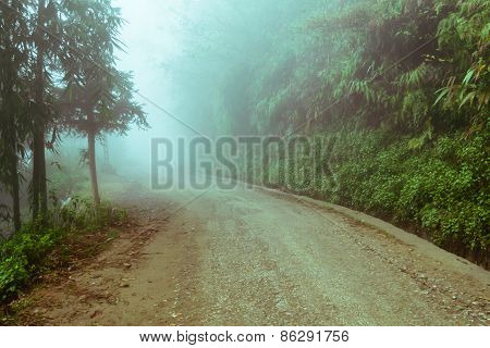 Walking Trail In A Green Forest With Fog
