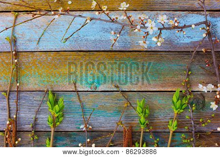 spring composition