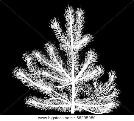 illustration with single white pine silhouette isolated on black background