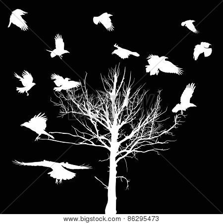 illustration with white dry large tree and crows silhouettes isolated on black background