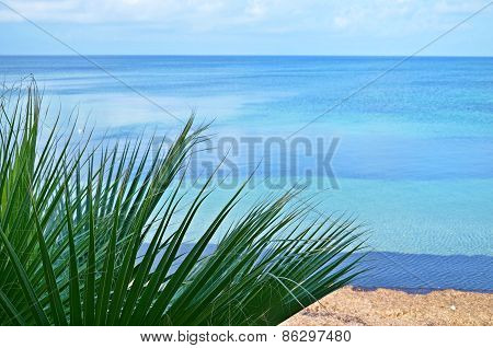 Green Leaves And Ocean On The Background