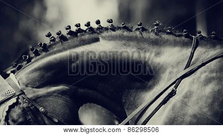 Neck Of A Horse.