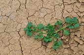 stock photo of survival  - The last plants survival in the dryness land - JPG