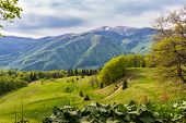 stock photo of foreground  - Mountain landscape with spring forest and mountain pasture in the foreground and the opposite of the valley with pine forest and snowfields on top of the ridge in the background - JPG