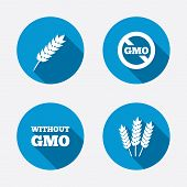 picture of wheat-free  - Agricultural icons - JPG
