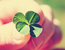 image of four  - a hand holding a four leaf clover toned with a retro vintage instagram filter  - JPG