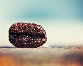 pic of extreme close-up  - a background with a coffee bean in macro  - JPG