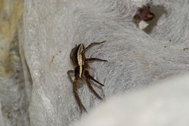 stock photo of terrestrial animal  - spider pets animals arachnid isolated animal brown