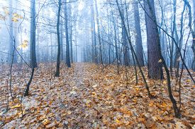 picture of decomposition  - Beautiful autumnal landscape of foggy forest with fallen leaves and old tree trunks - JPG