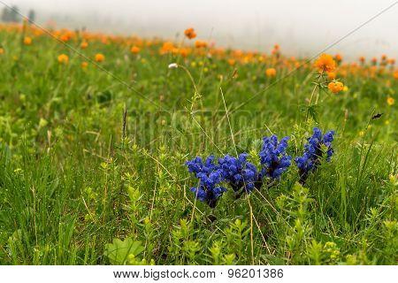 Wild Flowers Meadow Mist