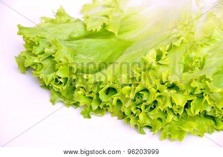 Lettuce bunch