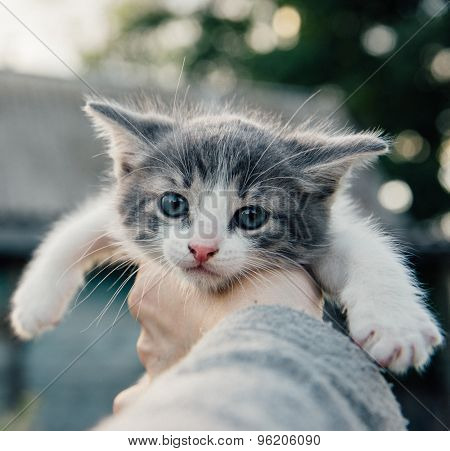 Cute kitten in the hand