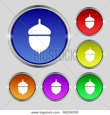 Acorn Icon Sign. Round Symbol On Bright Colourful Buttons. Vector