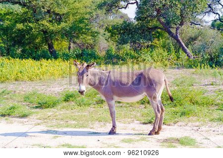 Donkey On The Field