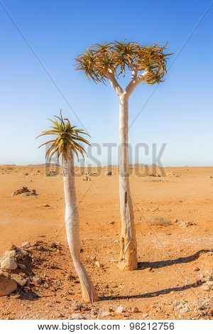 Trees On The Desert In South Africa