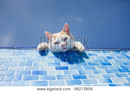 Playful White Cat Beside The Pool
