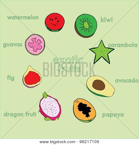 Vector exotic fruits