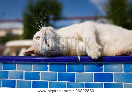 Cat Resting Beside The Pool