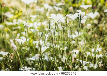 Beautiful wild flowers, outdoors