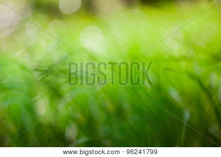 Eco nature background. Defocused bokeh