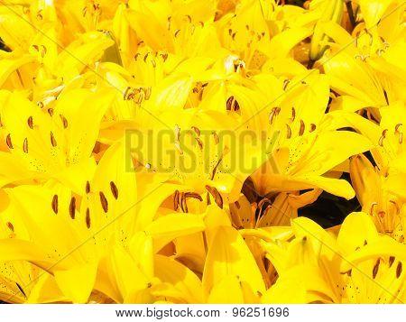 Closeup Of Beautiful Bouquet Of Yellow Lilies