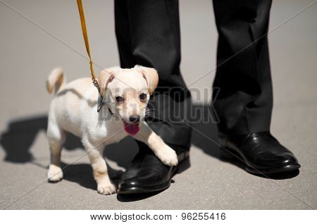 Puppy and man shoes