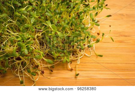 Fresh Alfalfa Sprouts Close Up