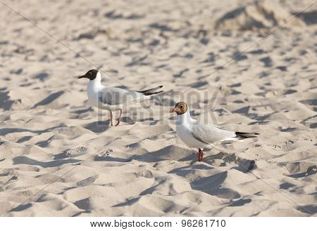 Two Seagulls On A Beach At Sunset.