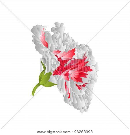 Hibiscus White Tropical Flowers Vector