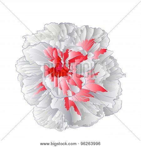 White Hibiscus Flower Isolated Vector