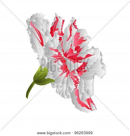 Hibiscus  White Vector